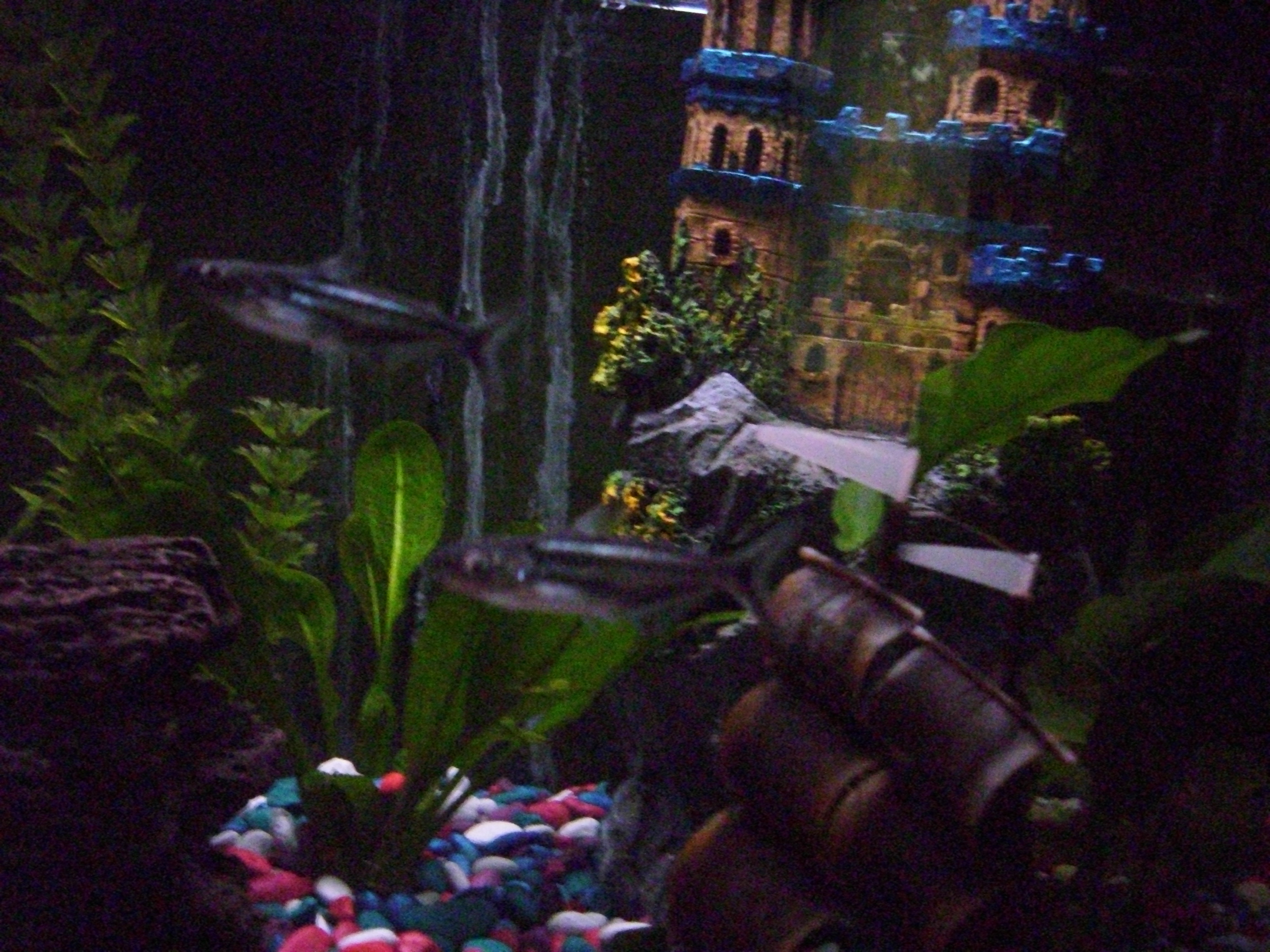 Freshwater aquarium fish that look like sharks - Due To Variations Within Species Your Item May Not Look Identical To The Image Provided